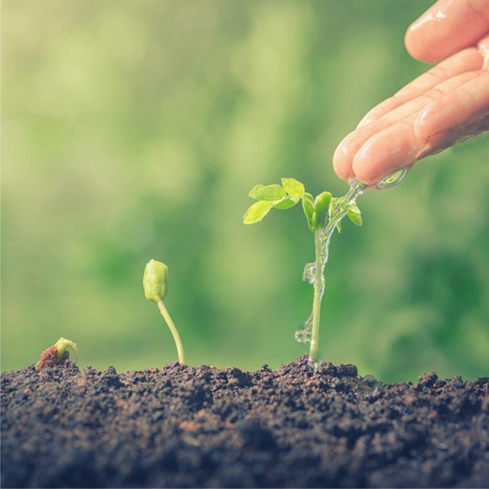 Establishing New Roots